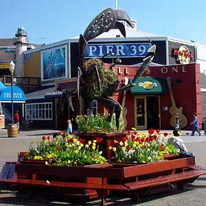 Pier 39, San Francisco.  Lots of seals here.  Went here with Cheryl and Bob and then out to Alcatraz!