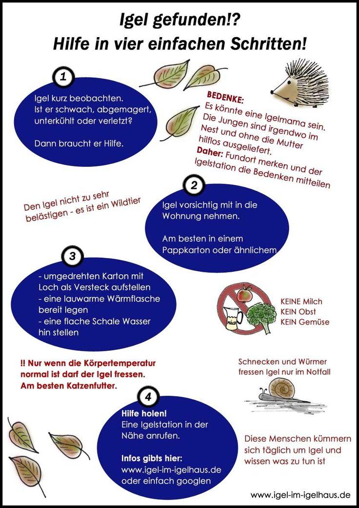 Wenn es kalt wird müssen Igel schnellstmöglich einen Unterschlupf finden um zu überwintern. Haben sie keinen, wird es gefährlich für sie. Die Grafik zeigt was zu tun ist.   Mehr Infos unter: www.igel-im-igelhaus.de