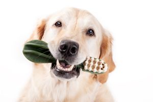 Pedigree's Tips on Keeping Your Dog's Teeth Clean