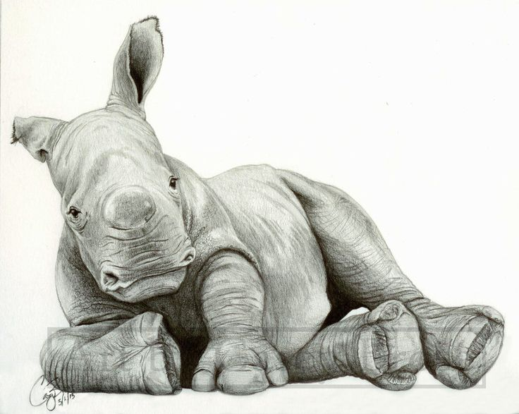 19 best ideas about Rhino on Pinterest | Cats, Realistic ...
