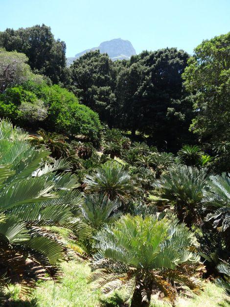 Jurassic plants - photo#21