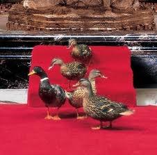 peabody hotel, memphis, tn  famous duck walk