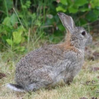 Razas de conejos en México http://www.mascotadomestica.com/articulos-sobre-conejos/razas-de-conejos-en-mexico.html