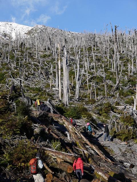 Hiking through the burnt forest, remains in the 2008 Chaiten Volcano eruption / Caminata por la ladera del volcan Chaiten, y el bosque quemado tras la erupcion de 2008   #secretpatagonia #patagonia