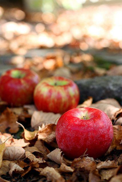 Croquer la pomme...