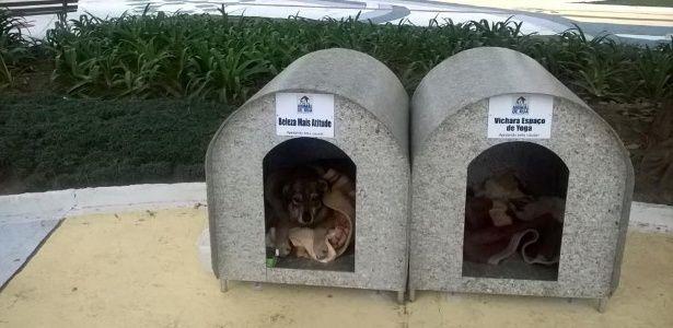 Contra o frio, voluntários espalham casinhas de cachorro em cidade de SC