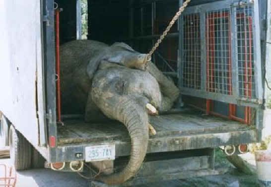 They sell old elephants-Facts about circuses