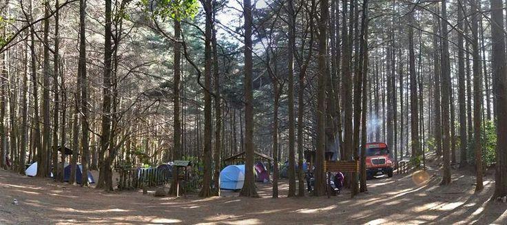 Bosque Nebuloso del Parque Nacional Montecristo, El Salvador, ideal para Acampar.