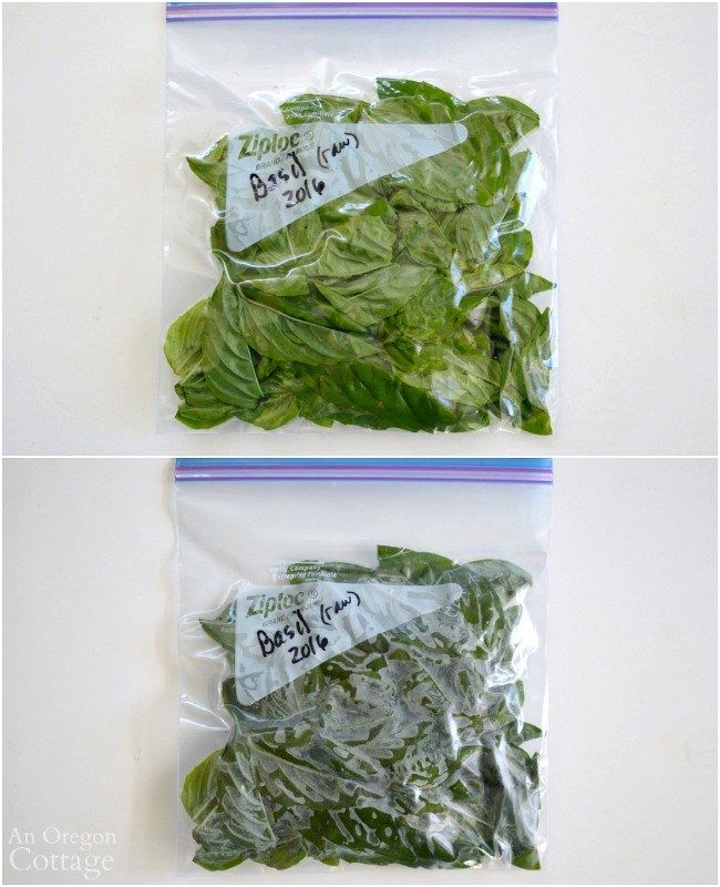Freezing Basil Leaves-unblanched raw in a bag