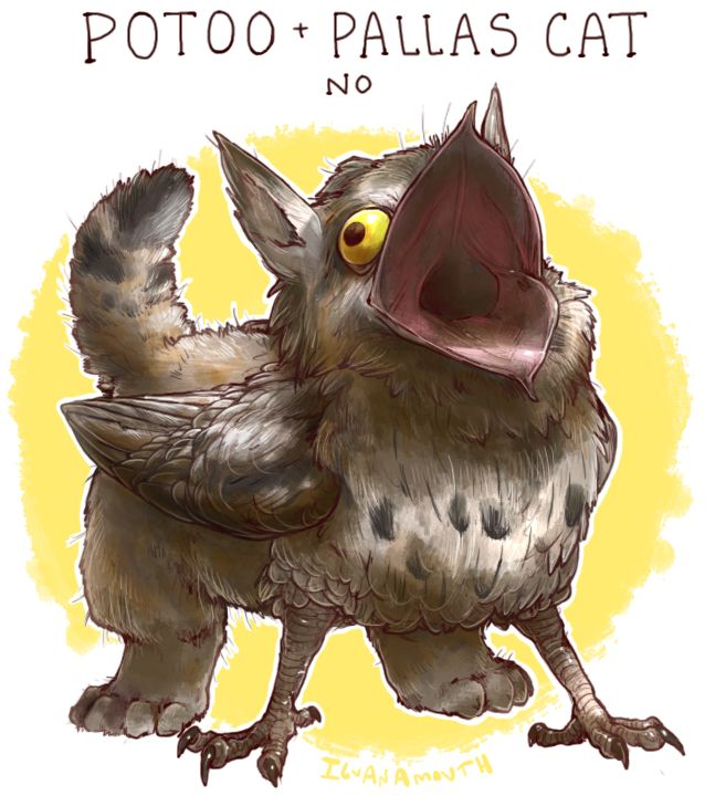 Unusual Gryphon: Potoo and a Pallas Cat. The two animals that best express Dinky's feelings at any given time. I'm putting this on her xmas card.