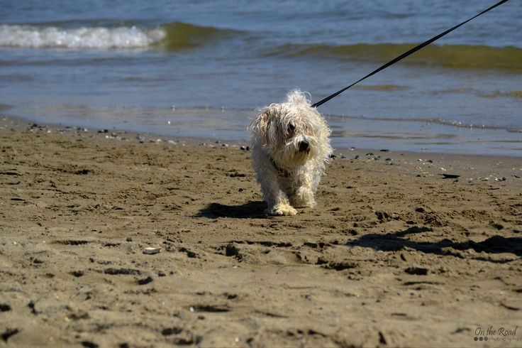 I found this little shaggy dude on a beach in Marina Romea, a few miles outside Ravenna.