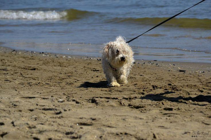 I found this little shaggy dude on a beach in Marina Romea, a few miles outside Ravenna.