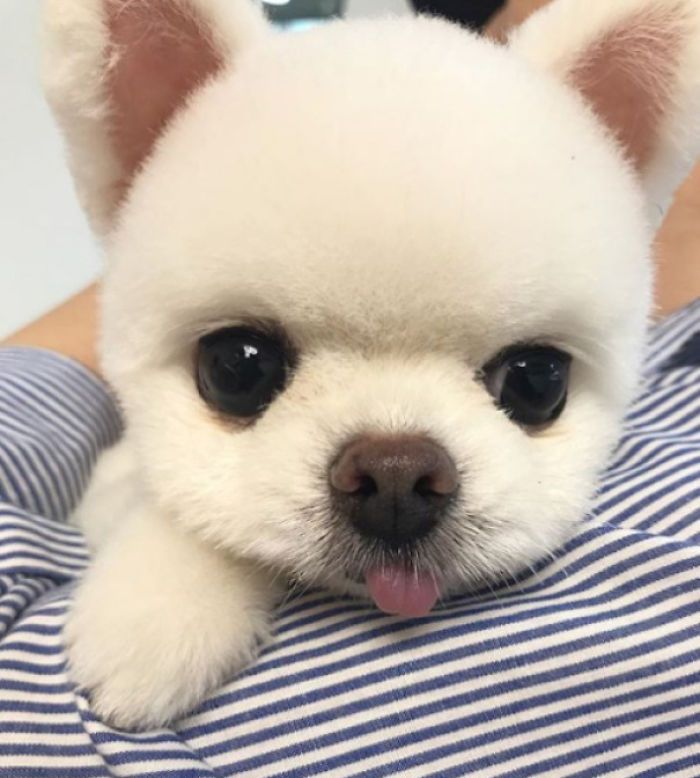 Little Pup Has Super Big Eyes Cute Funny Animals Cute Animals