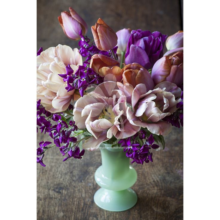 Belle Epoque tulip collection: 'La Belle Epoque', 'Bruine Wimpel' and 'Recreado' by Sarah Raven.