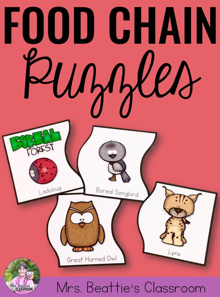 Teaching an animal unit? These food chain puzzles are the perfect early finisher activity! Includes simple food chains for 14 worldwide habitats, this package is the perfect companion to your Growth and Changes in Animals unit!