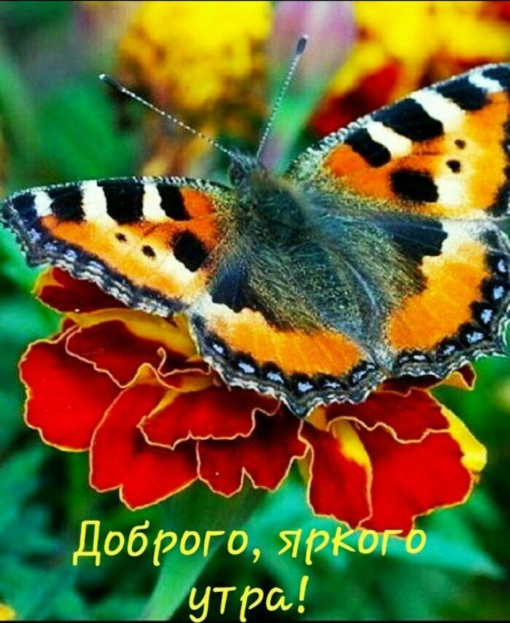 Доброе утро с бабочками картинки