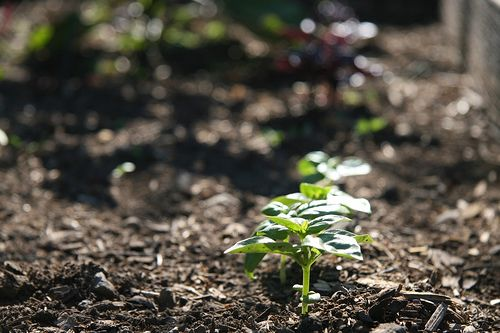 7 things to improve your soil homemade ants and how to for Things made out of soil