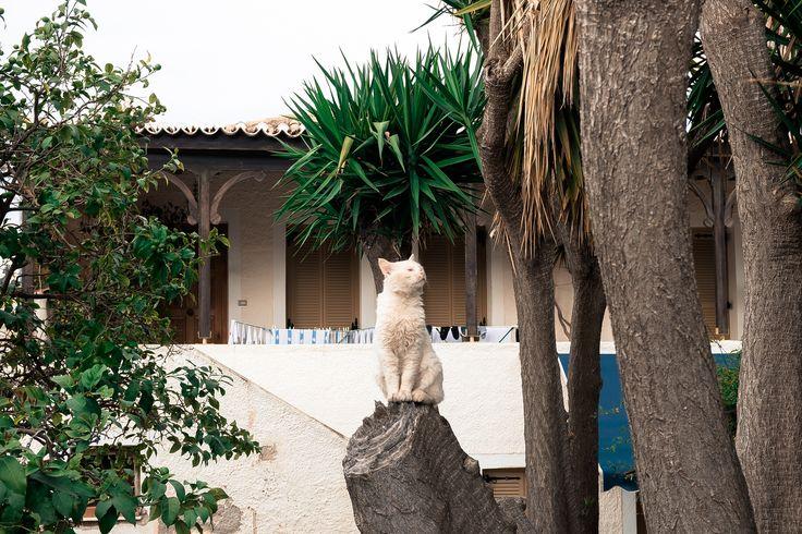 https://flic.kr/p/SLu6Xo | Greek cat