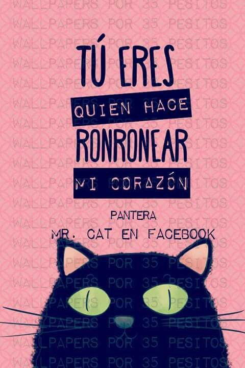 Mr.Cat aww que frase mas linda!!!