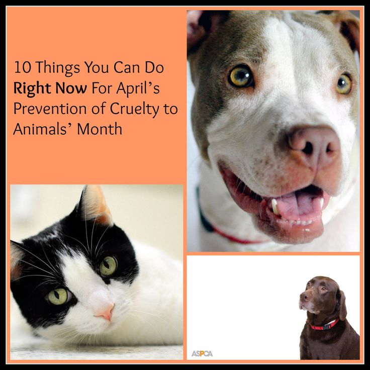 proactive prevention in animal cruelty Animal cruelty prevention animal cruelty is wrong and should not happen thank you for your support, i own none of the pictures, nor the backing track music,i.