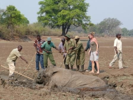 Dramatic elephant rescue