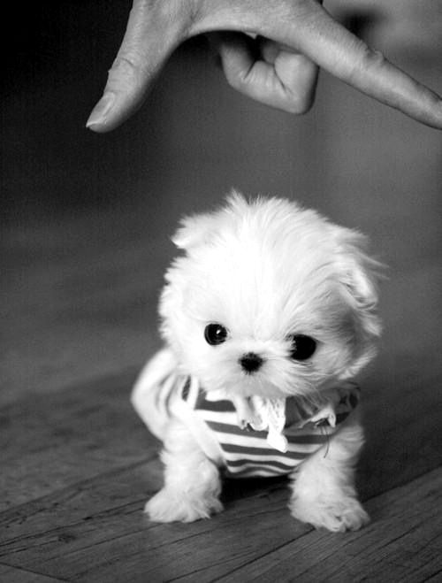 Confession: Not much of a dog person here, but this little canine creature could change all that. #adorable