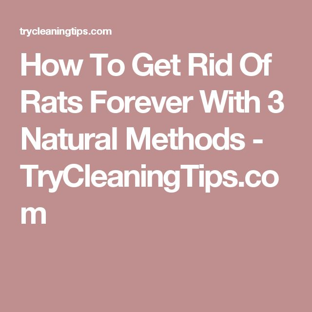 best 20 getting rid of rats ideas on pinterest rat control diy mice repellent and mice control. Black Bedroom Furniture Sets. Home Design Ideas