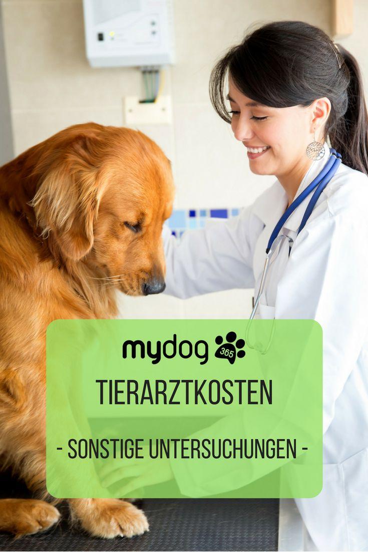 Tierarztkosten Sonstige Untersuchungen (mit Bildern