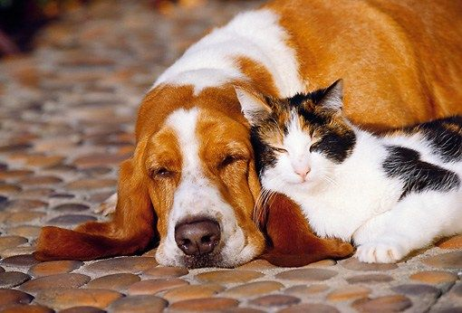 21+ Funny Basset Hound Quotes And Sayings | Bassett hounds