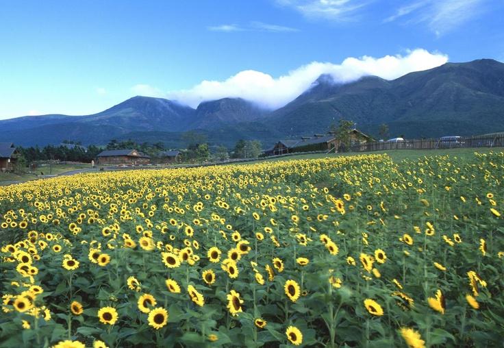 くじゅう花公園  Kuju flower park (in summer)