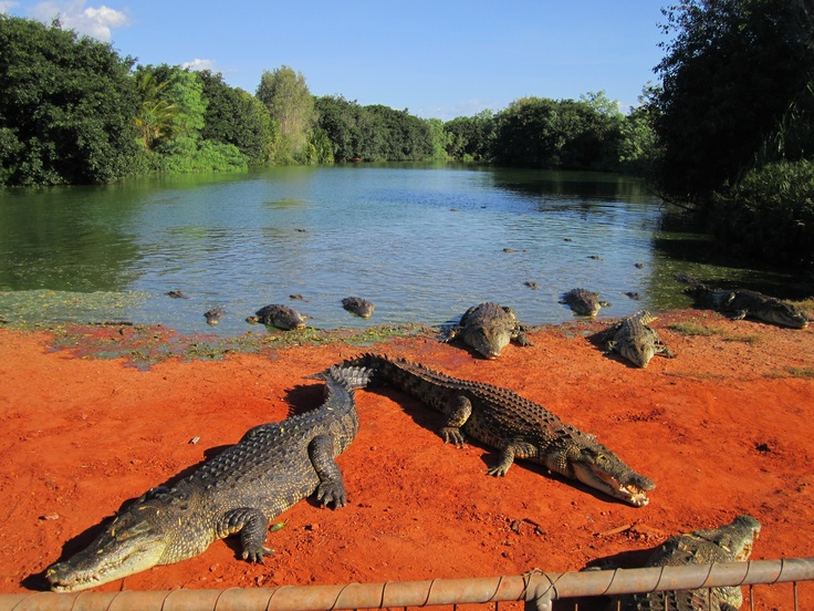 Whoaaa glad there is fence separating us from the crocodiles at Malcolm Douglas Wilderness Wildlife Park, Broome!
