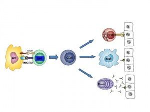 Durante muito tempo a Esclerose Múltipla (EM) foi considerada apenas uma doença autoimune, mediada por uma resposta inflamatória contra antígenos das proteínas componentes da bainha de mielina do SNC. Atualmente os pesquisadores reconhecem, além do componente inflamatório, a existência de um processo neurodegenerativo ao longo do curso da doença que é responsável pela progressão da …