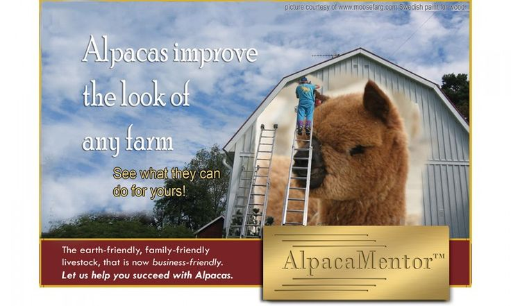 Alpaca Mentor ~ Your invitation to the New Alpaca Industry!