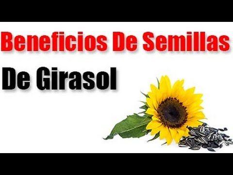 Conoce Los Beneficios de las deliciosas Semillas de Girasol para la salud!