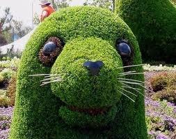 topiary: Gardens Topiaries, Topiaries Gardens, Grass Sculptures, Seals Topiaries, Gardens Art, Amazing Topiaries, Flowers, Beautiful Gardens, Animal Topiaries