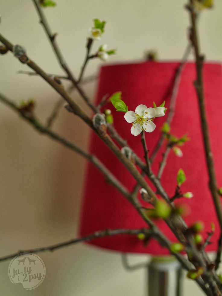 Ja, ty i 2 psy: a tiny bit of spring at our place
