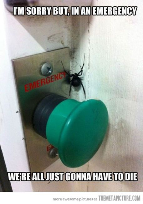 Arachnophobia take to the extreme. I don't agree with it but this picture is pretty freaking hilarious!