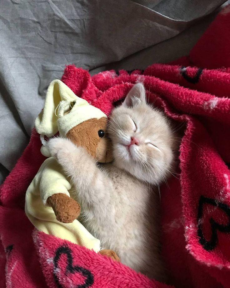 Chats Chatons adorable chaton qui, comme un bébé, dort avec son ourson ou doudou #Chats_Chatons  #adorable  #chaton #dort #commeunbébé #avec #ourson_doudou