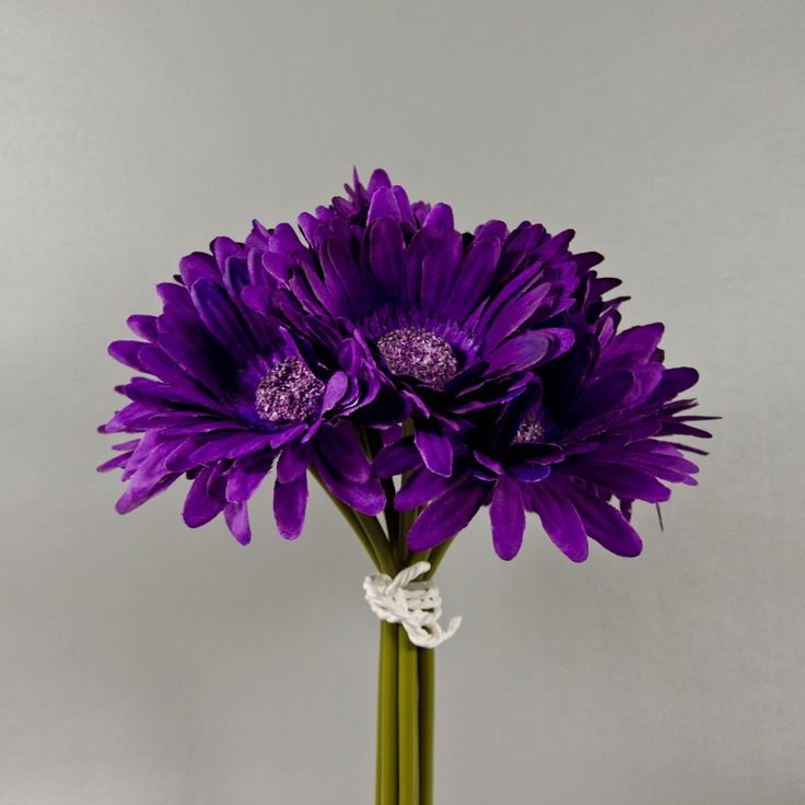 74 best gerbera daisies images on Pinterest | Gerbera daisies ...