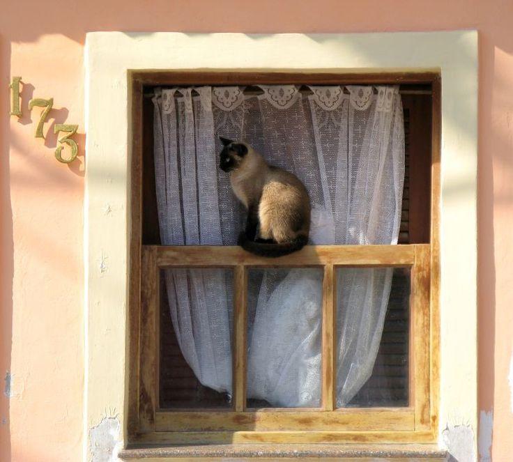 Olhares.com Fotografia
