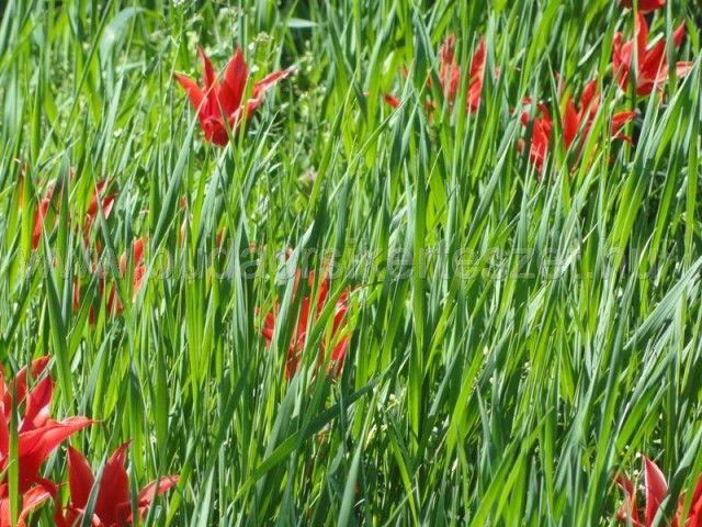 A nyár végi trágyázással felkészítheti növényeit a pihenésre…