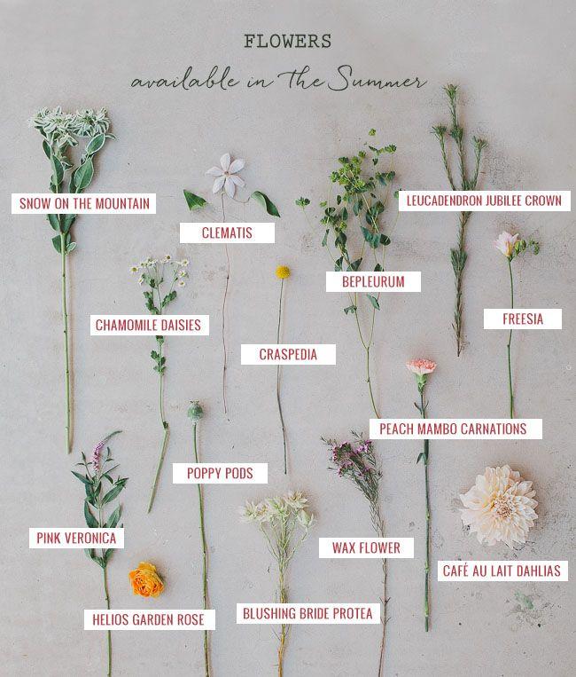 summer flower guide
