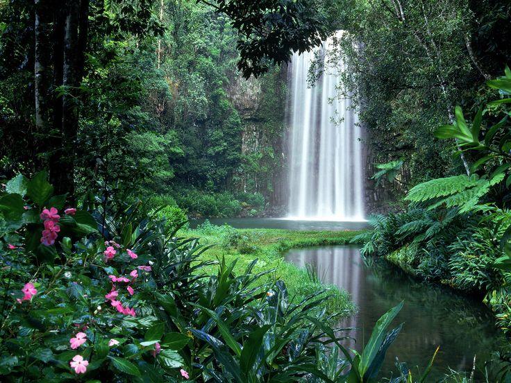 Millaa Millaa Falls, Atherton Tableland, North Queensland, Australia