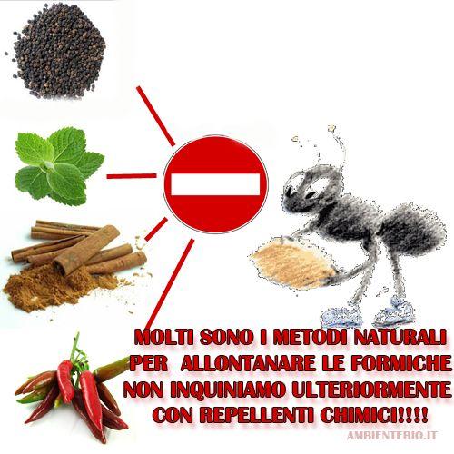 Consigli naturali per allontanare le formiche da casa e giardino - Ambiente Bio