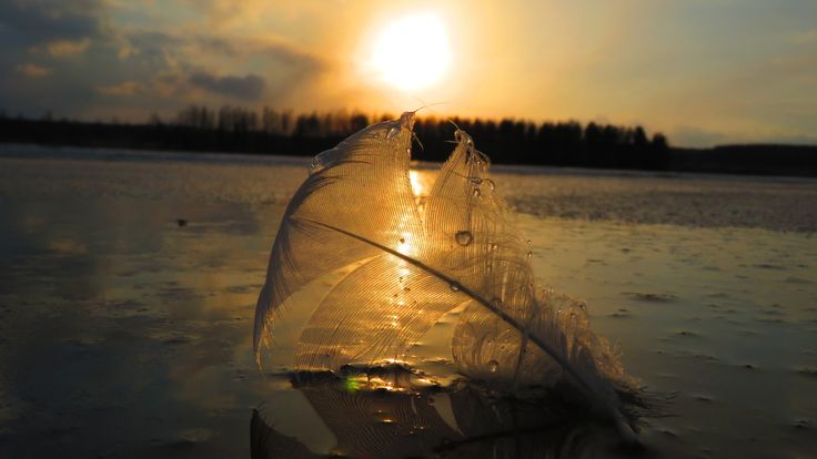 Feather sunset