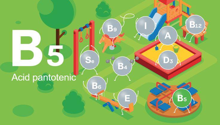 Acidulpantotenic(Pantotenatde calciu) este important în primul rând pentru sinteza hormonilor glandelor suprarenale şi pentru funcţionarea SNC. Este implicat în sinteza substanţelor, necesare pentru funcţionarea normală a sistemului nervos – neurotransmiţătorilor, mediatorilor şi hormonilor. Se stabilizează astfel starea sistemului nervos, aspect extrem de actual pentru copii şi adolescenţi.