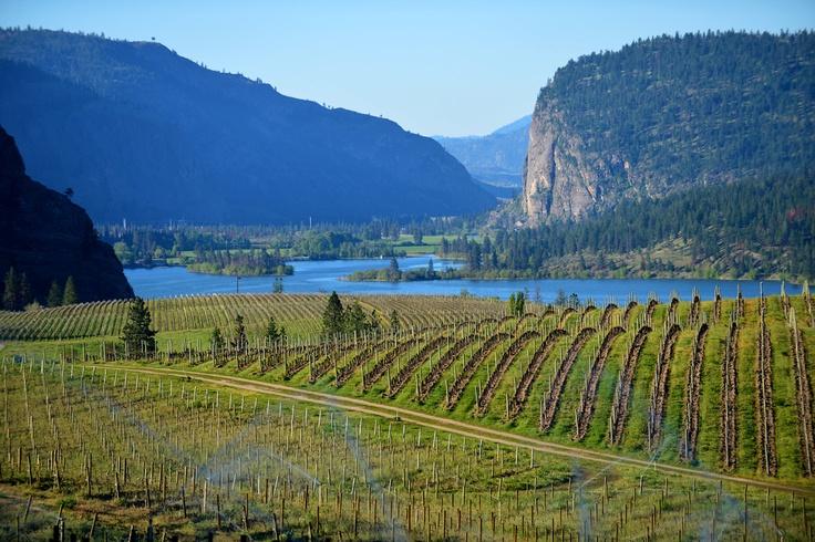 Vineyard overlooking Skaha Lake, BC