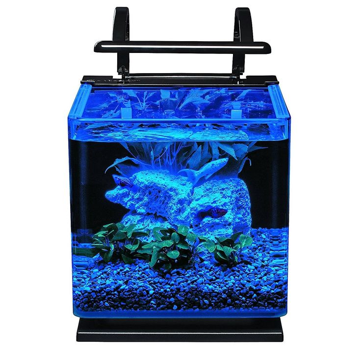 best 25 glass aquarium ideas on pinterest murano glass smithsonian catalog and glass fish tanks. Black Bedroom Furniture Sets. Home Design Ideas