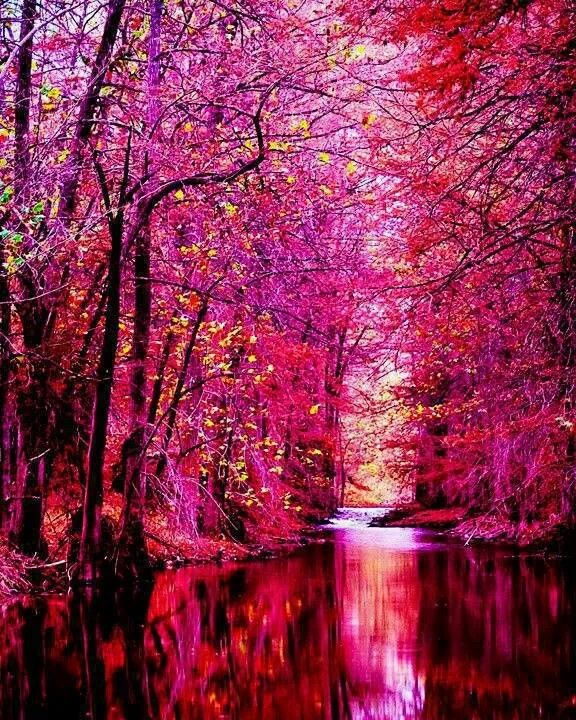 living in a place where you dont see scenes like this every day, it's easy to forget these colors even exist in nature.