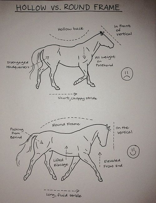 THE HOLLOW VS. ROUND FRAME- yep...definitely need to work with my horse on this! He looks exactly like the top picture:(